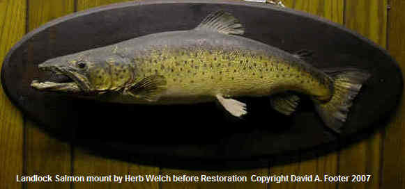 Herb Welch Landlock Salmon before restoration