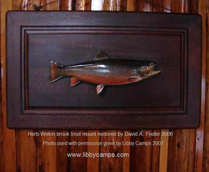Herb Welch Brook Trout mount restored by David 2006